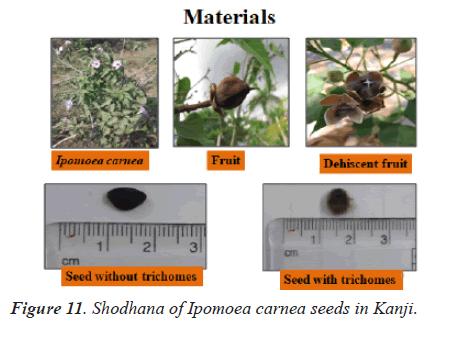 biomedres-seeds