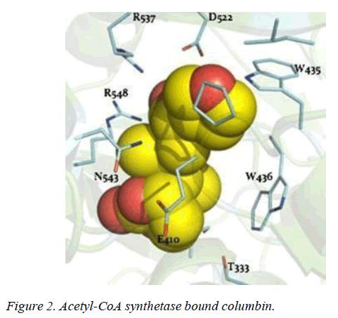 biomedres-synthetase