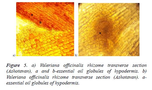 biomedical-research-netlike-oil-globules