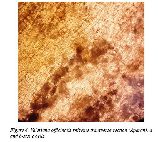 biomedical-research-netlike-rhizome