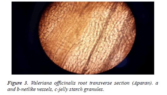 biomedical-research-netlike-vessels