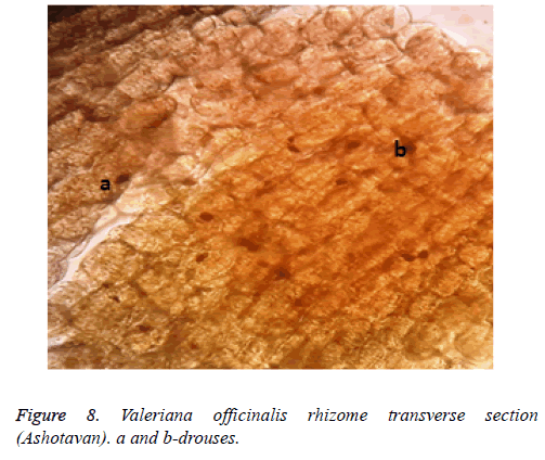 biomedical-research-rhizome-transverse