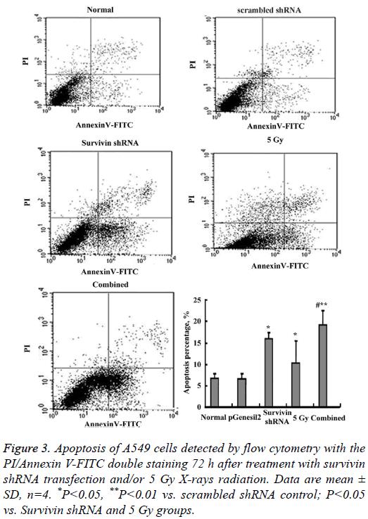 biomedres-A549-cells-detected