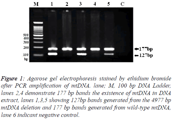 biomedres-Agarose-gel-electrophoresis