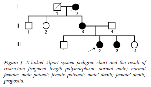 biomedres-Alport-pedigree