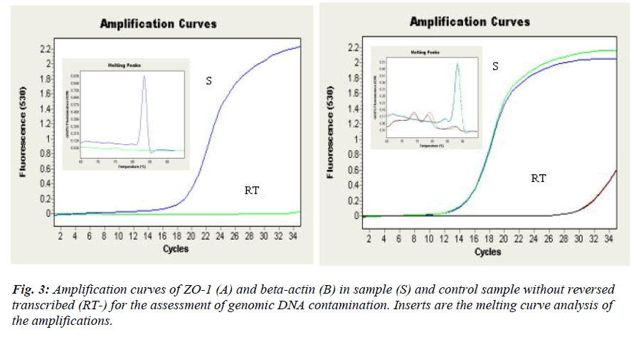 biomedres-Amplification-curves-ZO