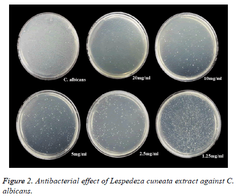 biomedres-Antibacterial-effect