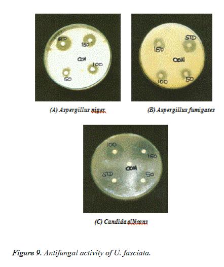 biomedres-Antifungal
