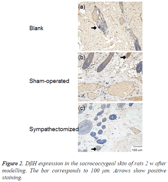 biomedres-Arrows-positive-staining