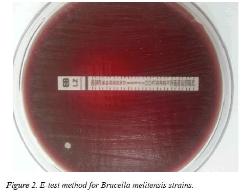 biomedres-Brucella-melitensis