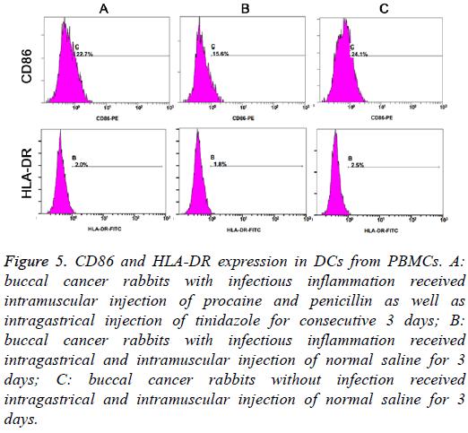 biomedres-CD86-HLA-DR-expression