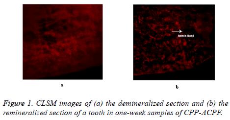 biomedres-CLSM-images