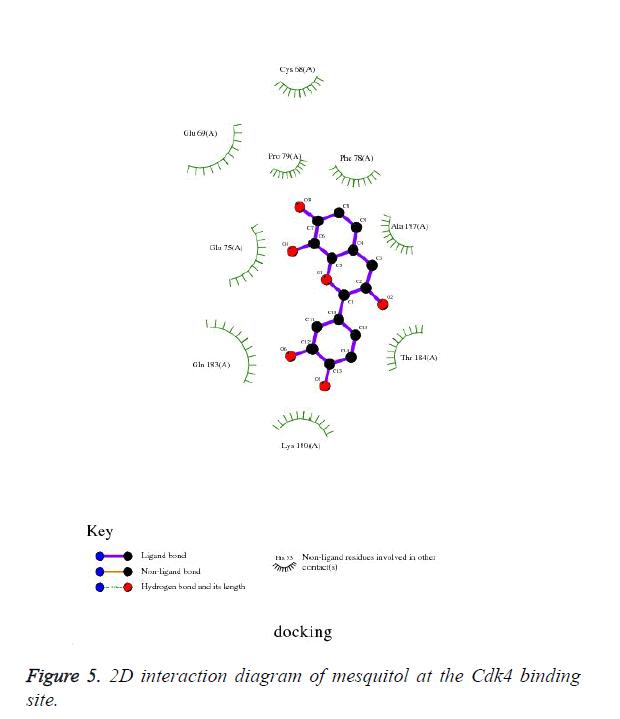 biomedres-Cdk4-binding