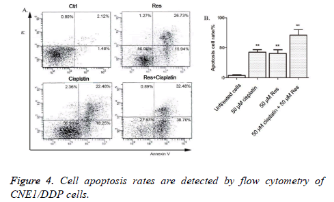biomedres-Cell-apoptosis-rates