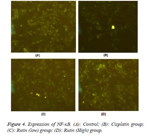 biomedres-Cisplatin-group