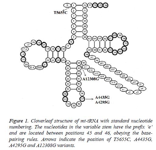 biomedres-Cloverleaf-structure