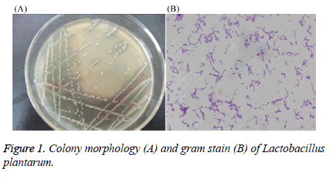 biomedres-Colony-morphology