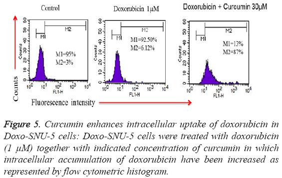 biomedres-Curcumin-enhances-intracellular
