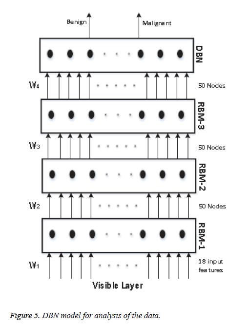 biomedres-DBN-model