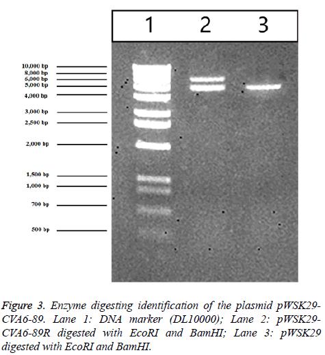 biomedres-DNA-marker