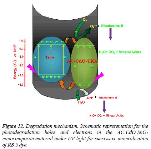 biomedres-Degradation-mechanism