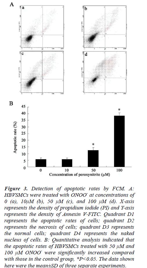 biomedres-Detection-apoptotic-rates
