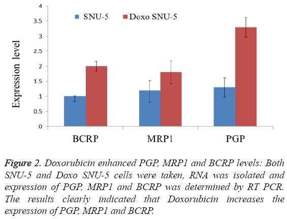 biomedres-Doxorubicin-enhanced-PGP