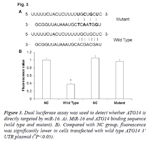 biomedres-Dual-luciferase