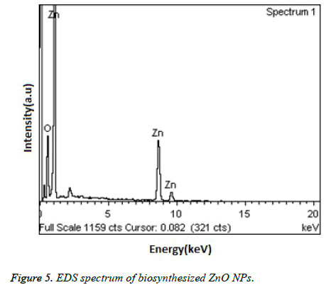 biomedres-EDS-spectrum