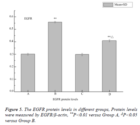biomedres-EGFR-protein