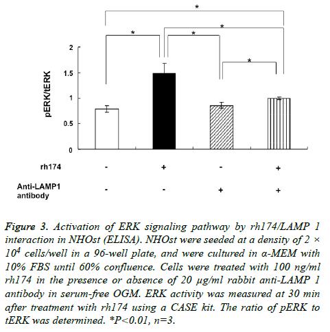 biomedres-ERK-signaling