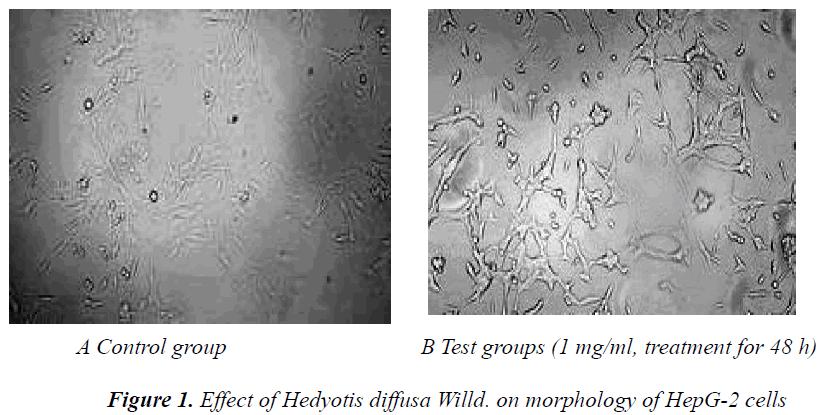 biomedres-Effect-Hedyotis