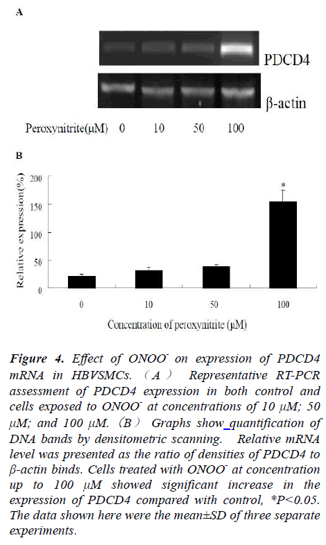 biomedres-Effect-ONOO-expression-PDCD4