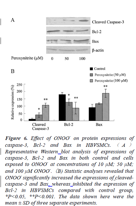 biomedres-Effect-ONOO-protein-expressions