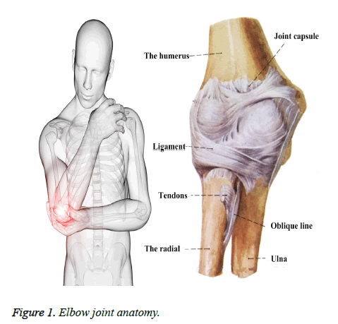 biomedres-Elbow-joint