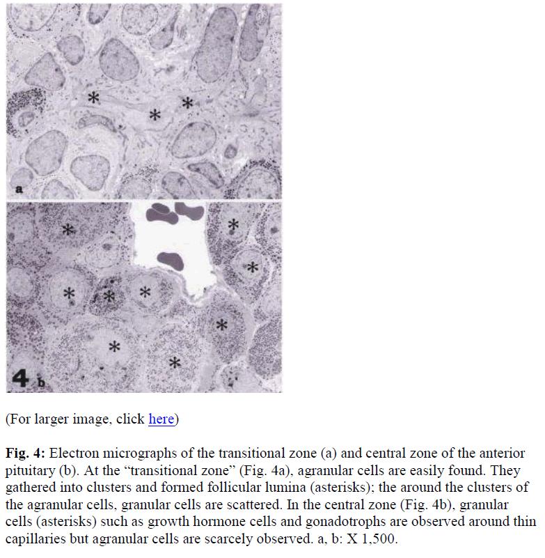 biomedres-Electron-micrographs