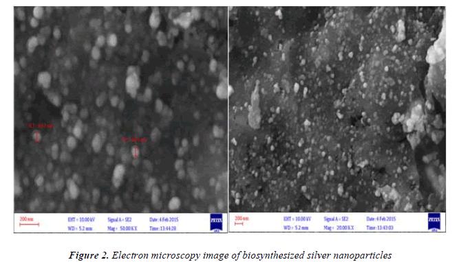 biomedres-Electron-microscopy