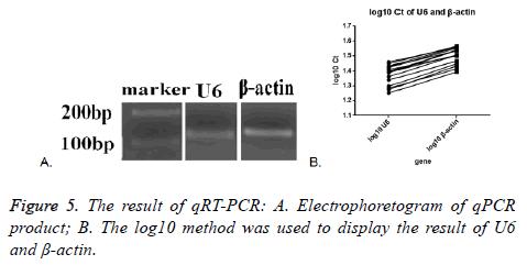 biomedres-Electrophoretogram