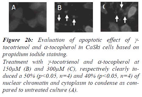 biomedres-Evaluation-apoptotic-effect