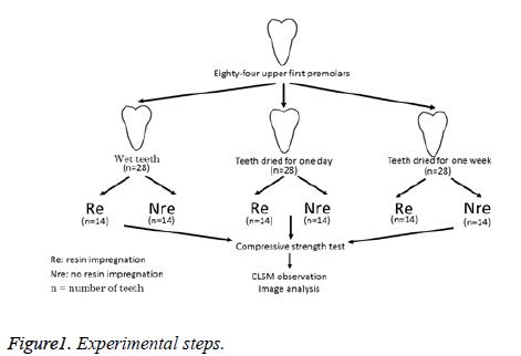 biomedres-Experimental-steps