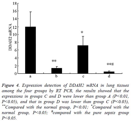 biomedres-Expression-detection-DDAH2