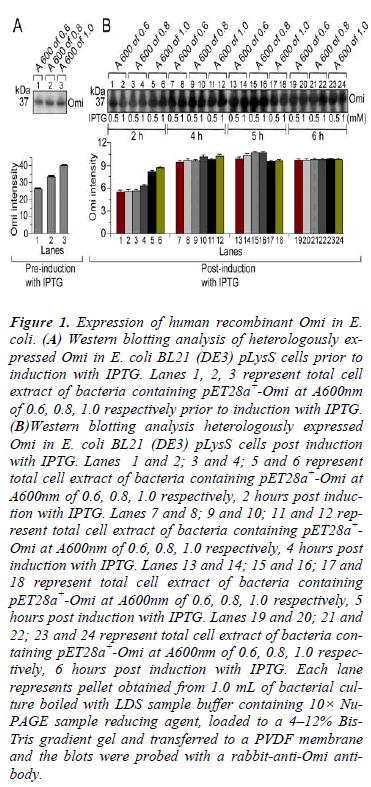 biomedres-Expression-human-recombinant
