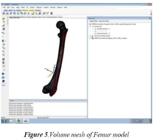 biomedres-Femur-model