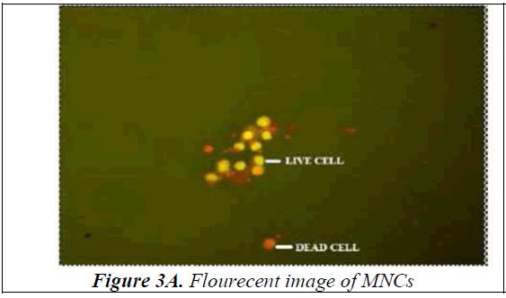 biomedres-Flourecent-image
