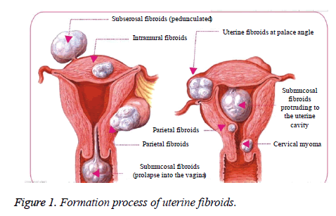 biomedres-Formation-process