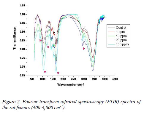 biomedres-Fourier-transform