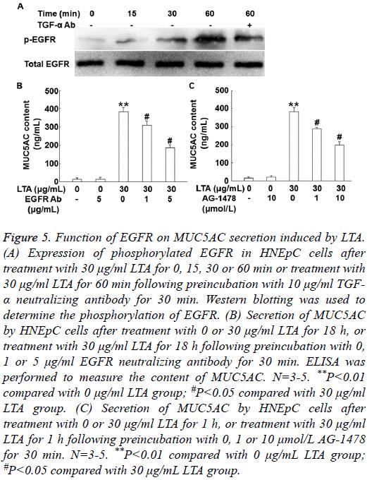 biomedres-Function-EGFR-MUC5AC