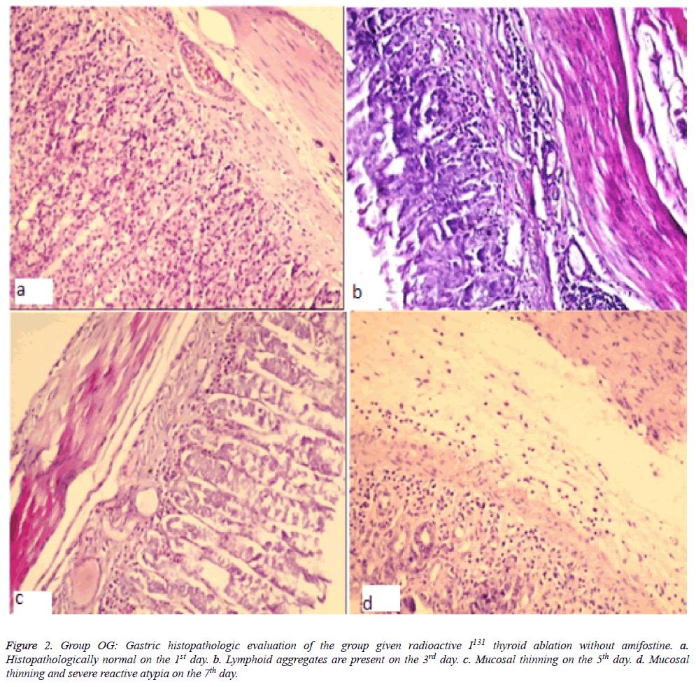 biomedres-Gastric-histopathologic
