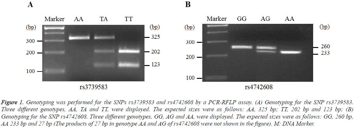 biomedres-Genotyping-performed