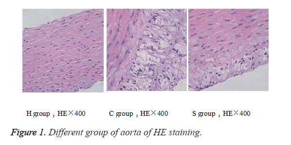biomedres-HE-staining